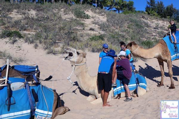 Camel Ride 25