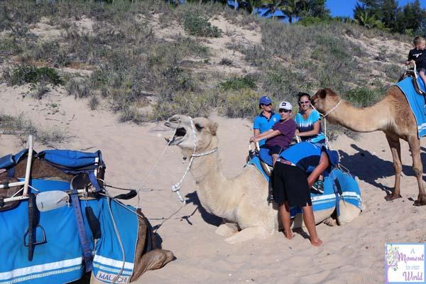 Camel Ride 26