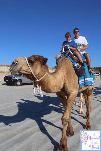 Camel Ride 36