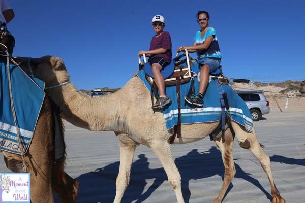 Camel Ride 37
