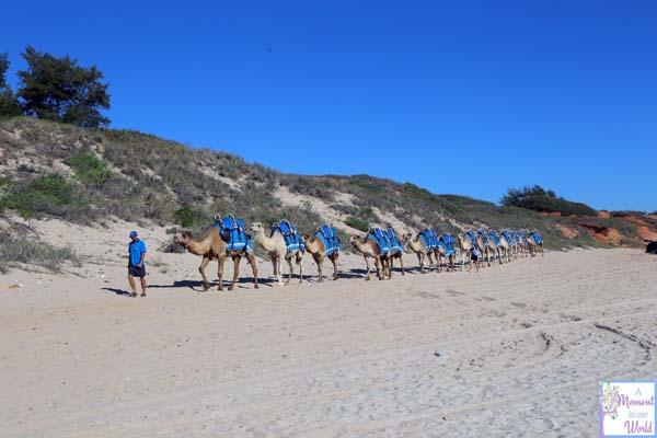 Camel Ride 9