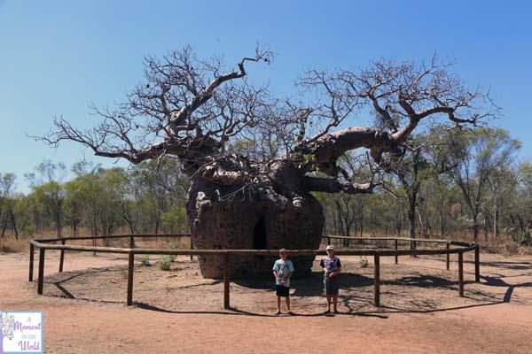 Derby Boab Prison Tree 1