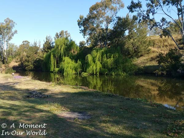 Bingara Riverside Free Camp 1