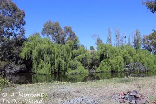 Bingara Riverside Free Camp 4