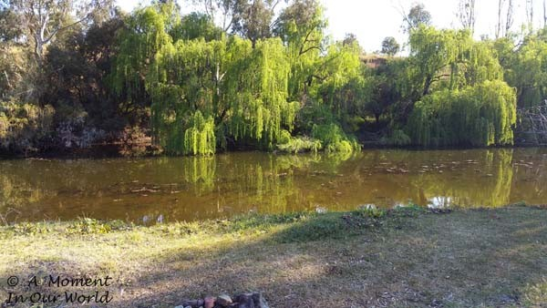 Bingara Riverside Free Camp