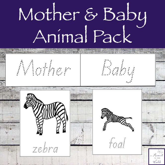 Learning about animals is great fun and thisMother and Baby Animal Pack are a great way to learn about different animals.