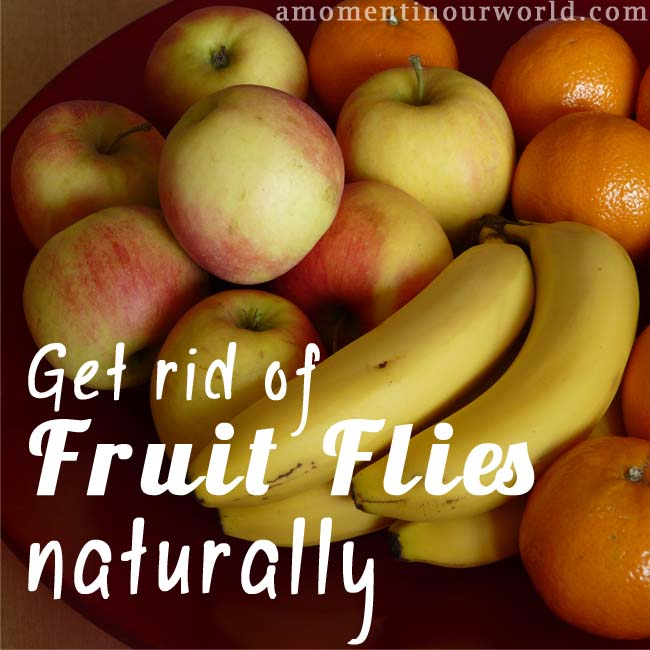 Get Ride of Fruit Flies Naturally