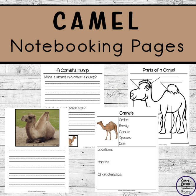 Camel Notebooking Pages