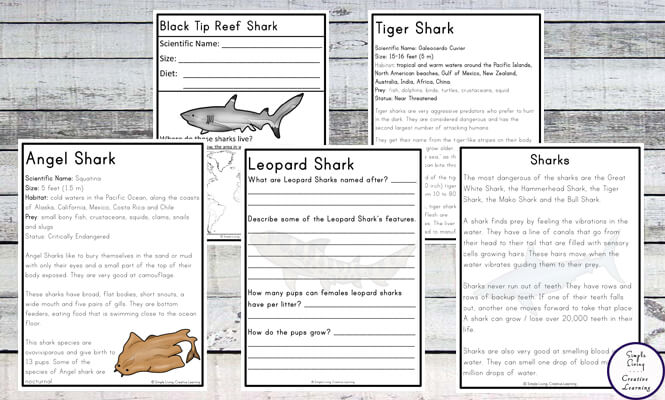 This awesome, 40+ page printable Shark Unit, contains information for ten of the most popular sharks.