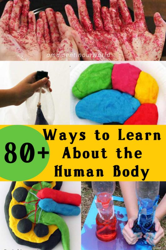 80-ways-to-learn-about-the-human-body