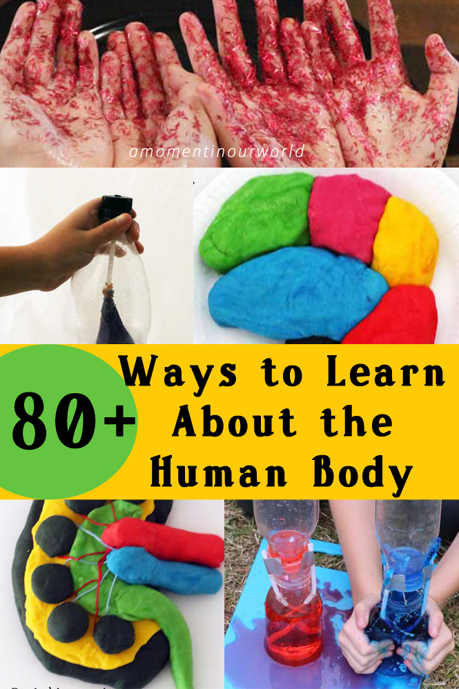 80+ Ways to Learn about the Human Body