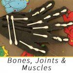 bones-joints-muscles