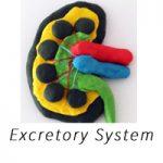 excretory-system