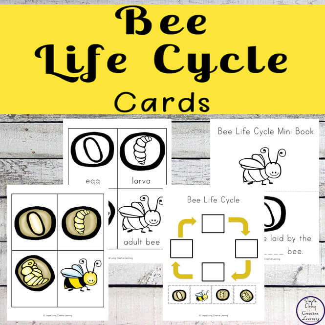 This Bee Life Cycle Card Pack includes a variety of activities all revolving around the life cycle of a bee.