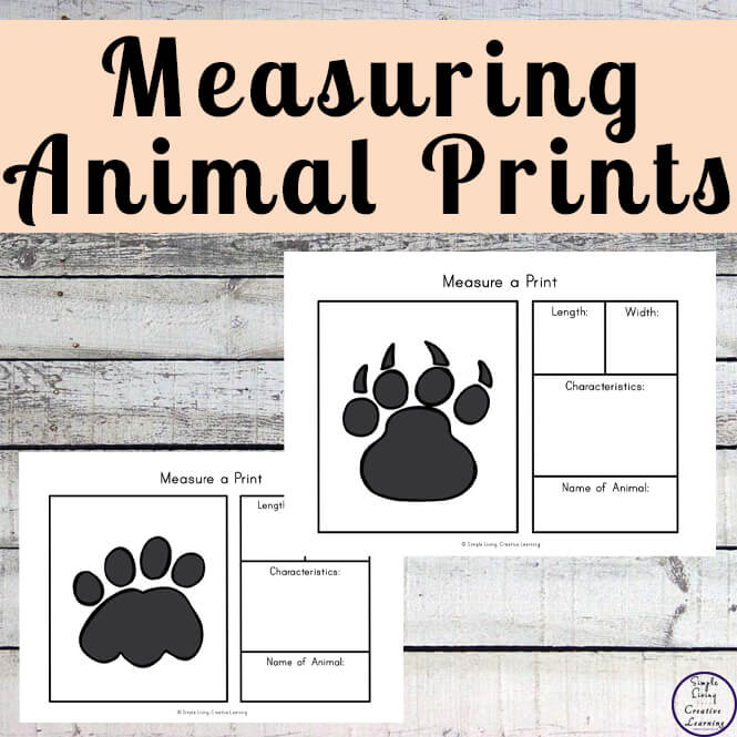 Animals leave their prints all over the place. The size of the print depends on the size of the animal. Though these prints are not to scale, your children will have fun measuringand studying them. So grab your copy of this measure an animal print pack today!