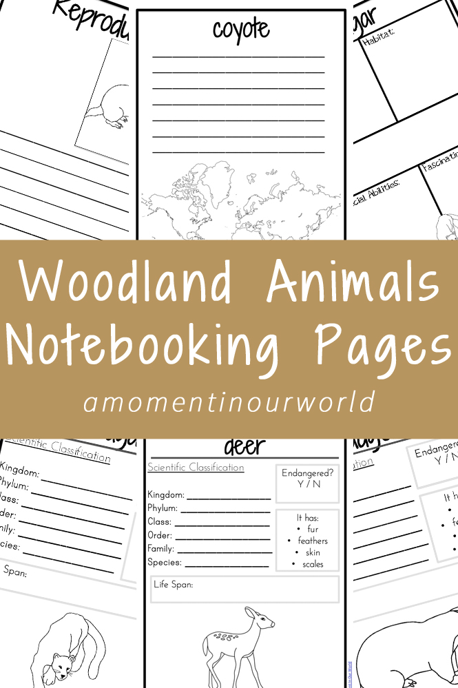 These Woodland Animals Notebooking Pages are great for recording what you have learnt.