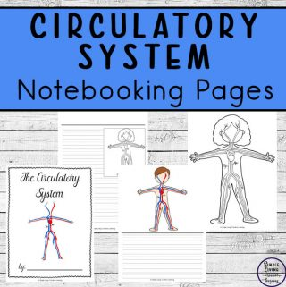Circulatory System Notebooking Pages
