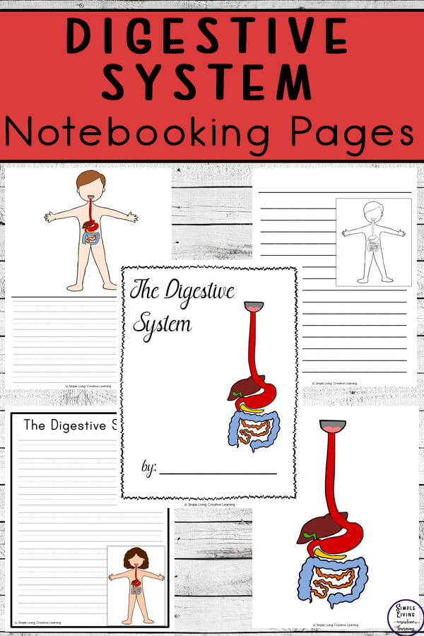 DigestiveSystem Notebooking Pages