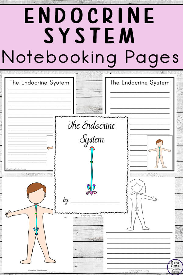 EndocrineSystem Notebooking Pages
