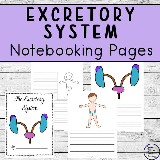 Excretory System Notebooking Pages