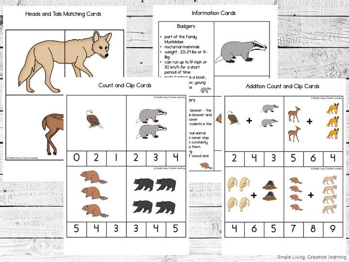 Woodland Animals Card Pack