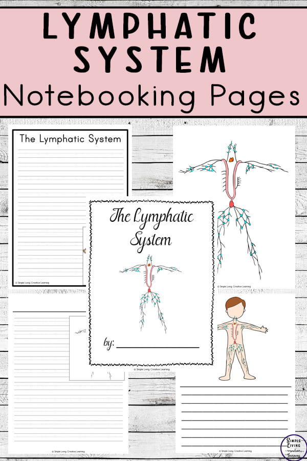 Lymphatic System Notebooking Pages