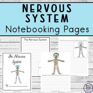 Nervous System Notebooking Pages