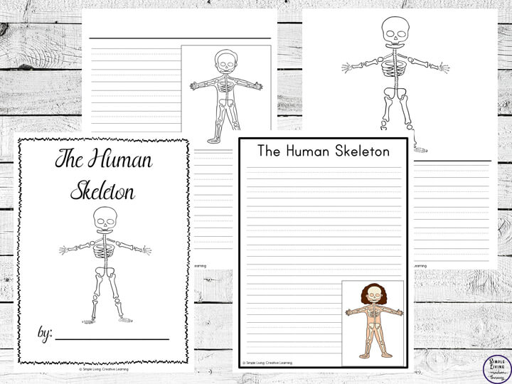 Human Skeleton Notebooking Pages