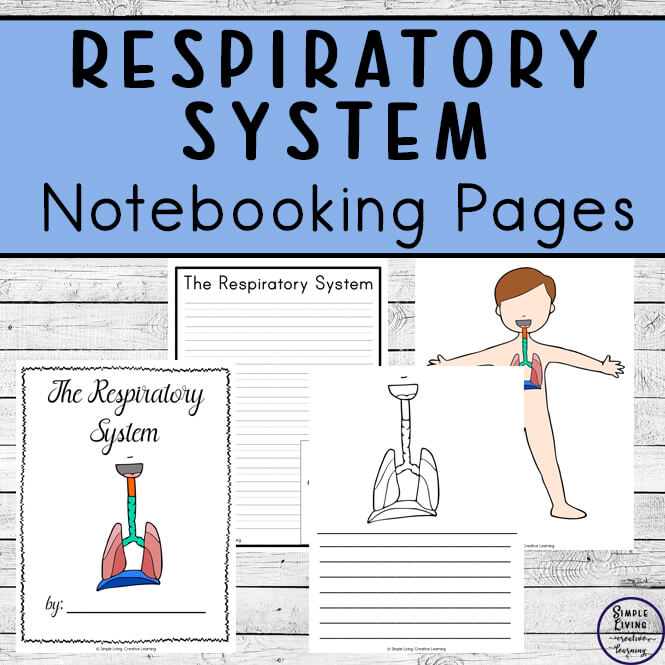 Respiratory System Notebooking Pages