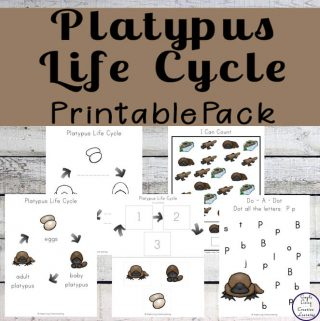 The platypus is one of Australia's most unique animals. This Platypus Printable Pack is aimed at children ages 2 - 9 and will help them learn more about the life cycle of the platypus.