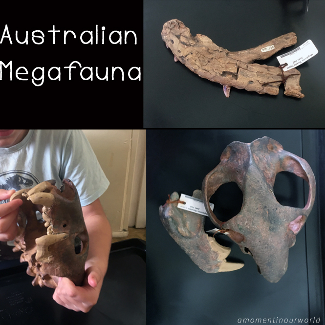 Learn about some of Australia's Megafauna with this Australian Megafauna Study.