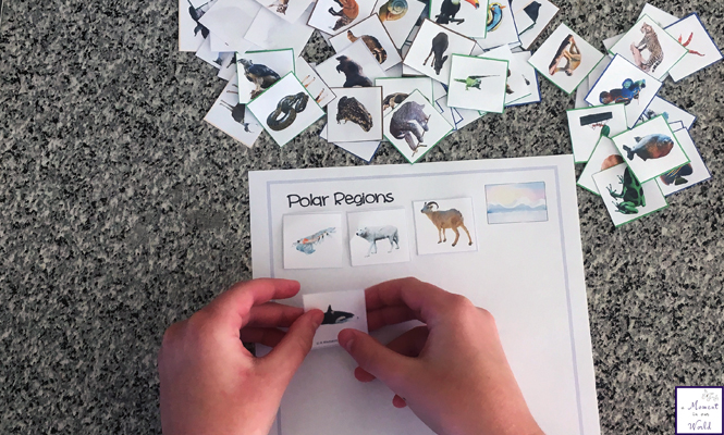 Learning about animals and their habitats is so much fun with these animal habitat mats and cards.