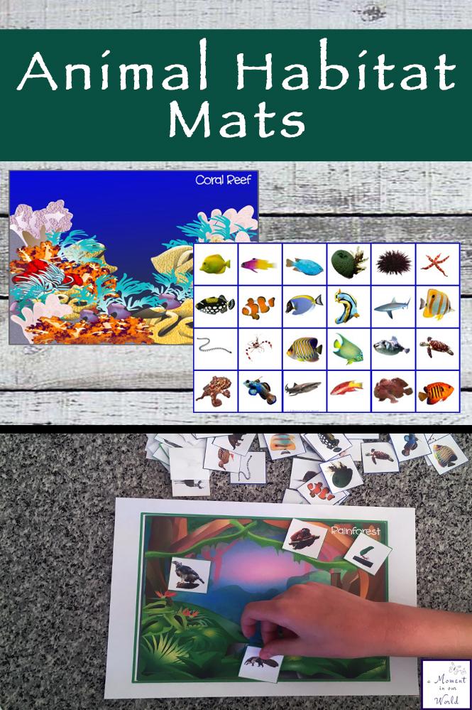 animal homes box and printable animal habitat mats