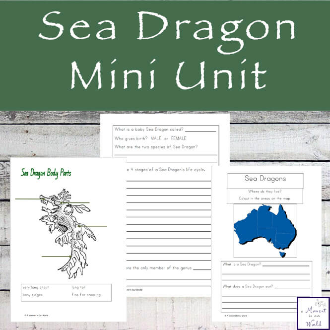 Learn about these unusual, vulnerable fish with this fun Sea Dragon Mini Unit.