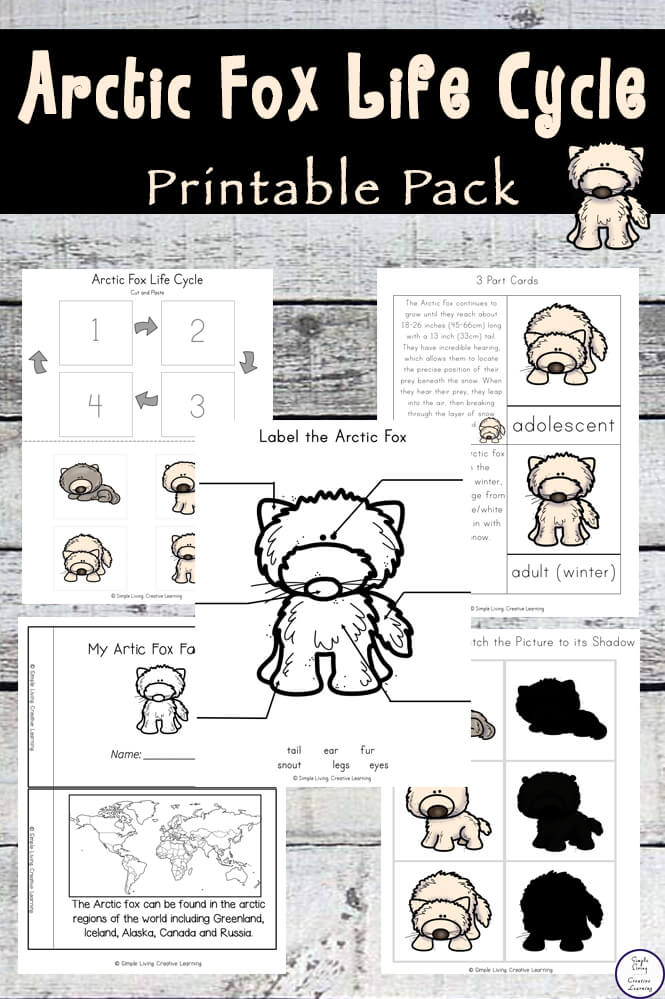 Aimed at children in preschool and kindergarten, this Arctic Fox Life Cycle Printable Pack, is a great way to learn more this incredible creature.