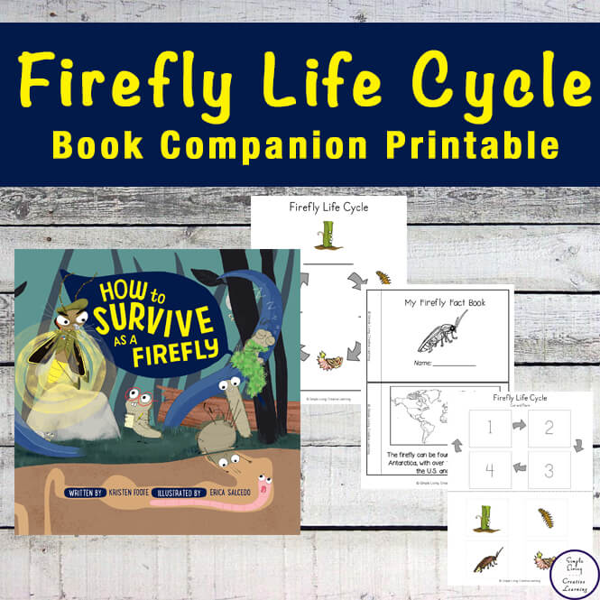 Children will love reading How to Survive as a Firefly while completing the activities in this Firefly Life Cycle Printable Pack, learning lots about these creatures, their habitat and their prey.