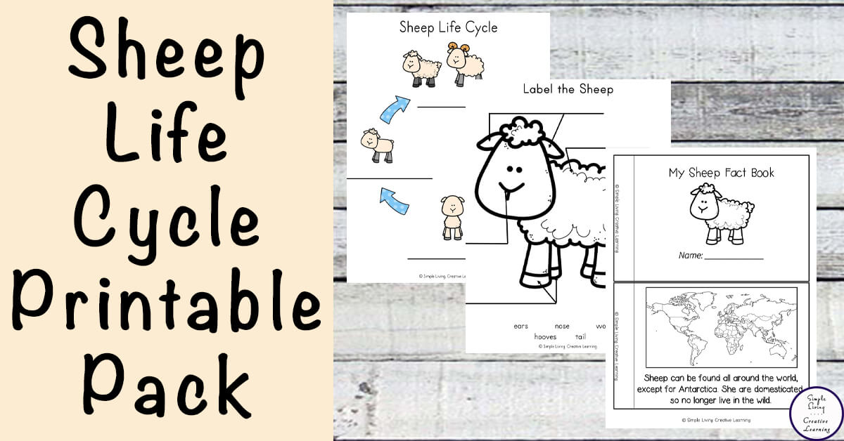 Sheep Life Cycle Printable Pack Simple Living Creative Learning