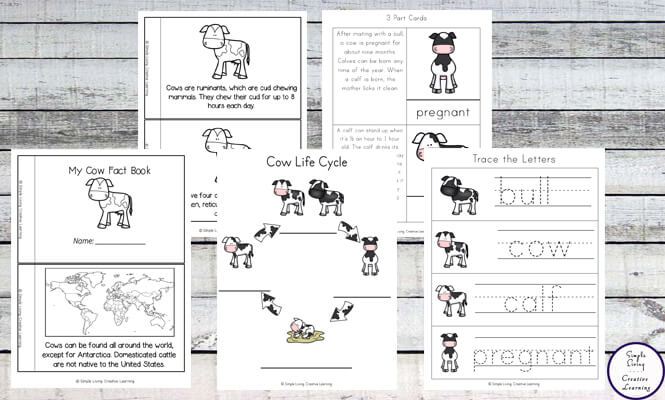 Cow Life Cycle Printable Pack B Simple Living Creative Learning