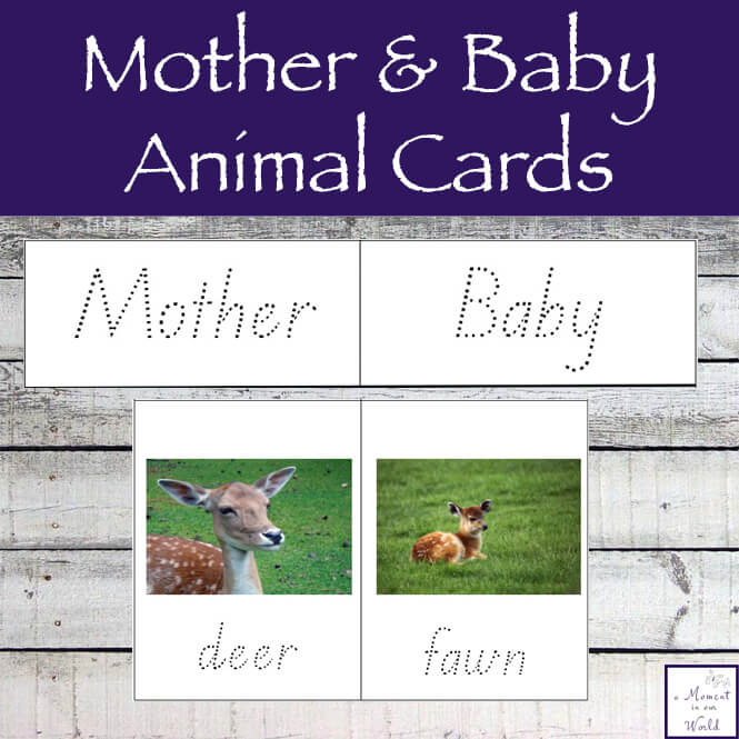 Learning about animals is great fun and this Mother and Baby Animal Pack are a great way to learn about different animals.