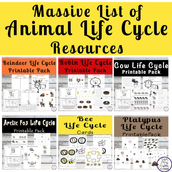Massive list of animal life cycle resources