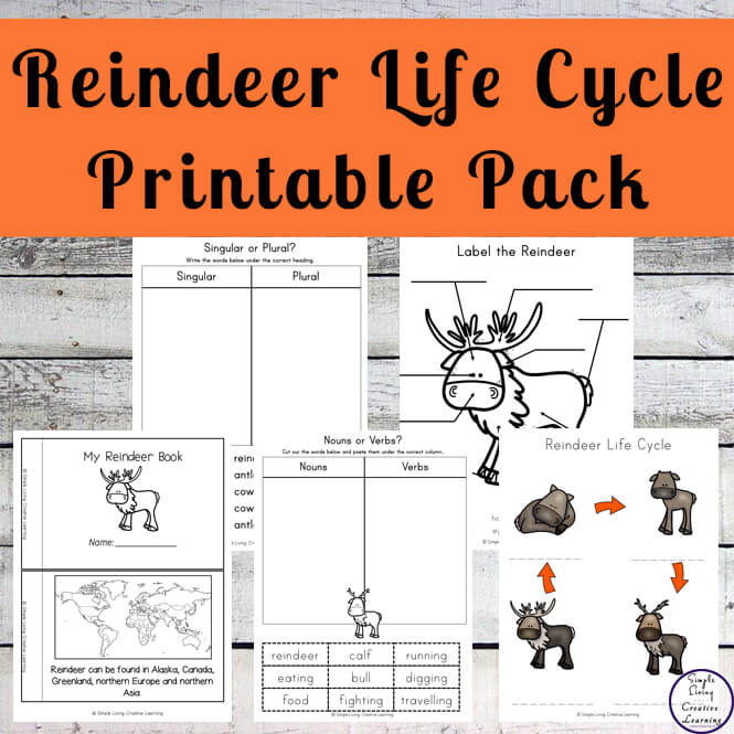 Through completing this Reindeer Life Cycle Printable Pack, children will learn more about these beautiful creatures who are very popular around Christmas.