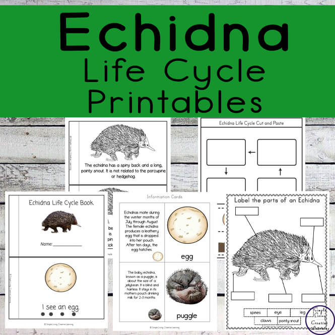 Echidna Life Cycle Printables