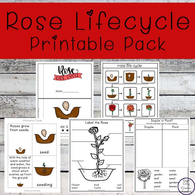 Rose Life Cycle Printable Pack