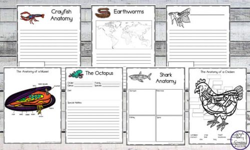 Prepare children for learning about the inner-workings of animals with these exciting Anatomy of Animals Notebooking Pages.