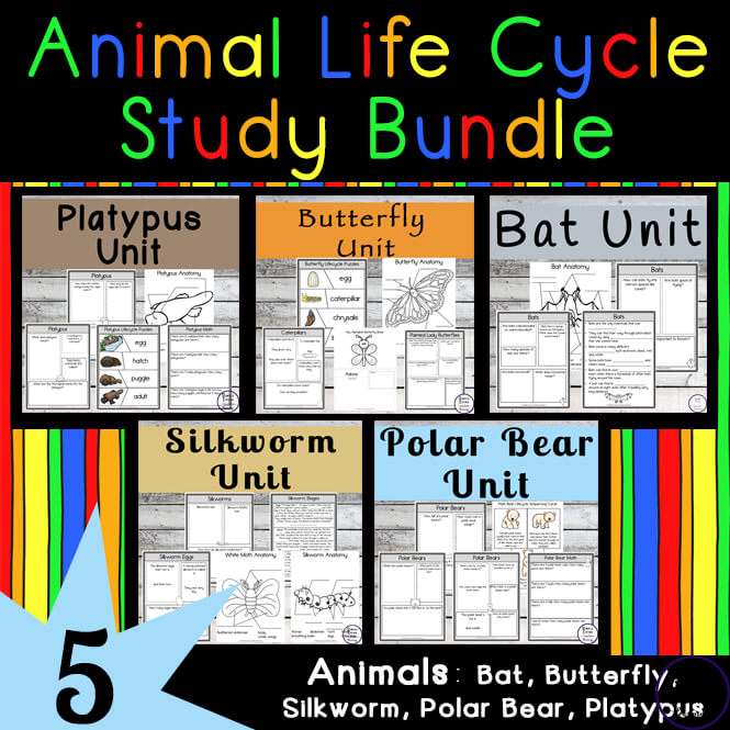 Animal Life Cycle Study Bundle