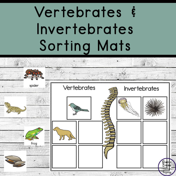 Vertebrates and Invertebrates sorting mats
