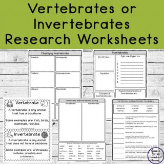 Dynamite image for invertebrates worksheets free printable