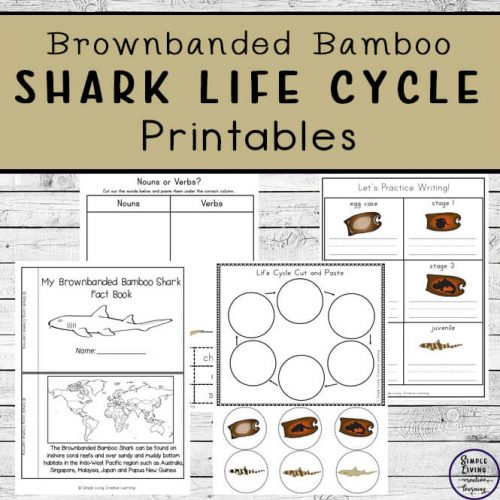 Learn about the Brownbanded Bamboo Shark Life Cycle with these fun printables, aimed at young children. There are also Brownbanded Bamboo Shark Notebooking Pages that older children will enjoy.