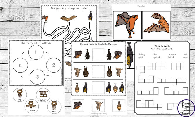 This Bat Printable Pack is a great way to teach children about bats and their life cycle twhile working on their math & literacy skills.