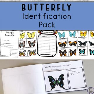 This butterfly Identification Pack can be used to identify butterflies in your area as well as when you are researching these lovely insects.